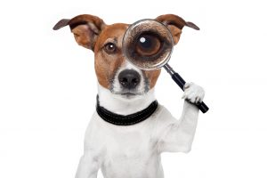 Dog with magnifying glass over left eye